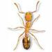 Tępienie mrówek